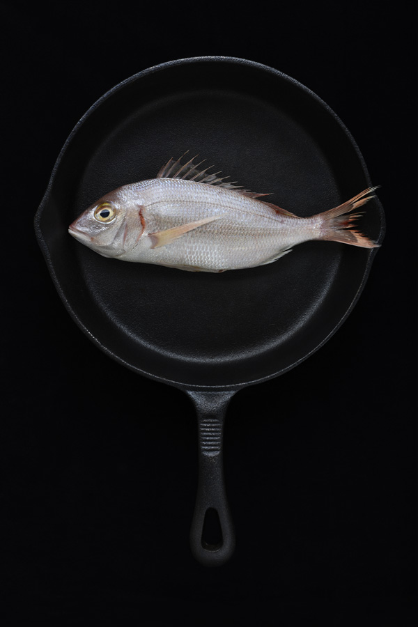 Fish, Cast Iron, Tasos, Gaitanos, Camilla, Wordie, octopus, sardines, heads, blood, back, background, photography, fine art, food, studio, lighting,